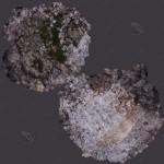 Concrete_Debris (11)
