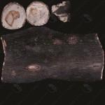 Wood_Log15